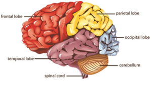 Brain Blog